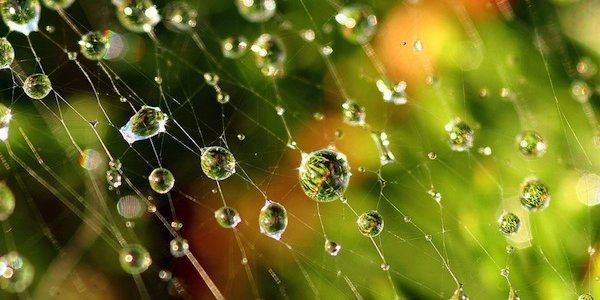 Make the most of the open web!. Credit: Flickr | Spiders Web by Lida Rose. CC BY ND 2.0